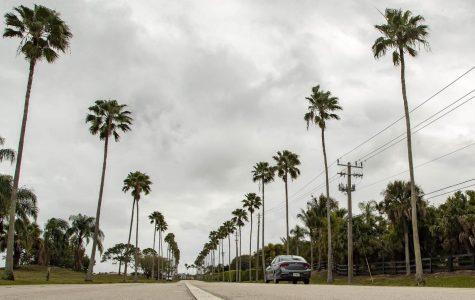 Bye, Bye Palm Trees!