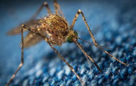 BEWARE: The Nile Virus!