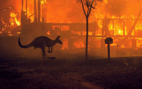 Australia's Wildfires are Impacting Native Animals in a Big Way