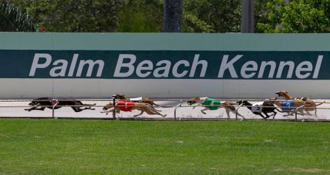 What Will Happen to the Palm Beach Kennel Club?
