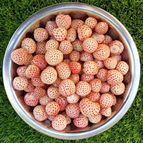 Are Pineberries In Season Due to Cool Weather?