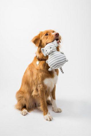 2021 Best Dog Toys